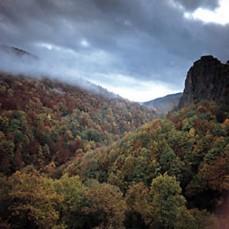 Guiarural. La selva de Irati, el mayor hayedo de la península. img_20100415181135.jpg