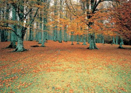 Guiarural. La selva de Irati, el mayor hayedo de la península. img_20100415181158.jpg