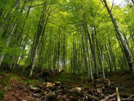 Guiarural. La selva de Irati, el mayor hayedo de la península. img_20100415181237.jpg