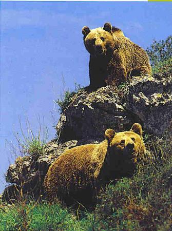 Guiarural. La senda del oso en Teverga. img_20100505171533.jpg