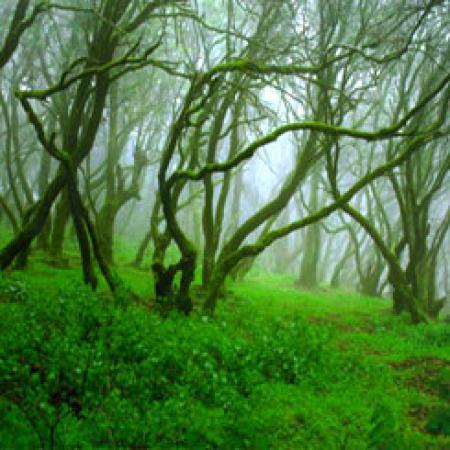 Guiarural. El bosque bajo la niebla. img_20100507220121.jpg