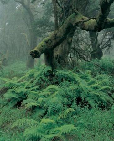 Guiarural. El bosque bajo la niebla. img_20100507220141.jpg