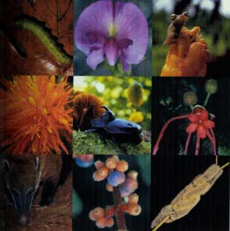 Guiarural. 2010 Año Internacional de la Biodiversidad. img_20100524193214.jpg
