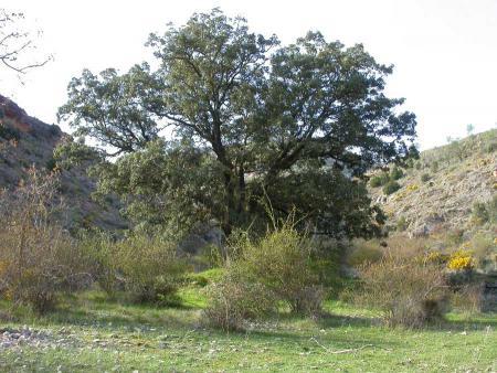 Guiarural. Senderismo por el cañón del río Mesa, un santuario para las aves. img_20100602190953.jpg