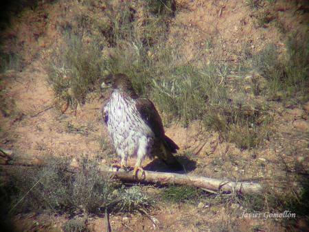 Guiarural. Senderismo por el cañón del río Mesa, un santuario para las aves. img_20100602191118.jpg