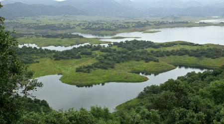 Guiarural. Los linces reintroducidos en Sierra Morena han empezado a reproducirse. img_20100618103058.jpg