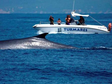 Guiarural. Avistamiento de cetáceos en el estrecho de Gibraltar. img_20100630143903.jpg