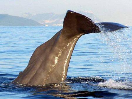 Guiarural. Avistamiento de cetáceos en el estrecho de Gibraltar. img_20100630143948.jpg