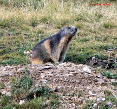 Guiarural. Valle de Tena (Huesca), la ruta de las marmotas. img_20100702172701.jpg