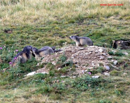 Guiarural. Valle de Tena (Huesca), la ruta de las marmotas. img_20100702172723.jpg