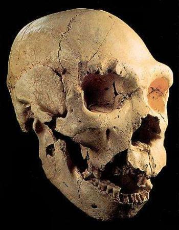 Guiarural. Se inaugura el Museo de la Evolución Humana en Burgos. img_20100712195507.jpg