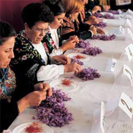 Guiarural. La Fiesta de la Rosa del Azafrán. img_20101026162910.jpg