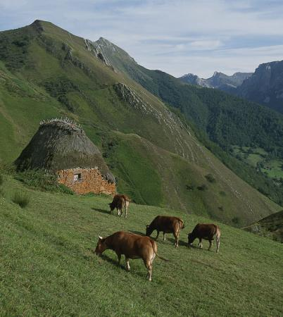 Guiarural. La comarca Vaqueira, la Asturias más ancestral. img_20101208140655.jpg