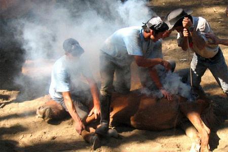 . A Rapa das Bestas, un rito ancestral. img_20110702124249.jpg