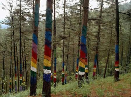 . El bosque mágico. img_20110709120909.jpg