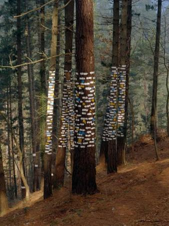 . El bosque mágico. img_20110709121054.jpg
