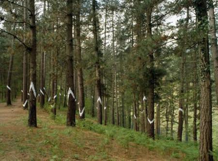 . El bosque mágico. img_20110709121113.jpg
