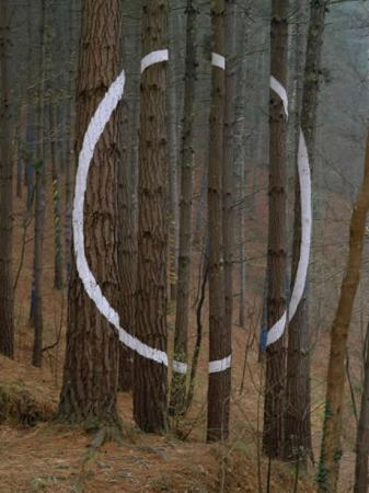 . El bosque mágico. img_20110709121140.jpg