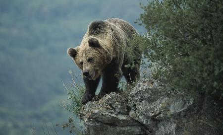 . Somiedo, guardián de la naturaleza. img_20120224174300.jpg