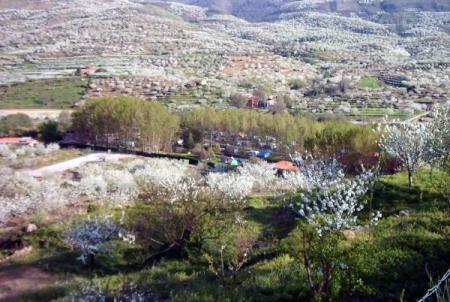 . La floración de los cerezos en el valle del Jerte. img_20120331182548.jpg