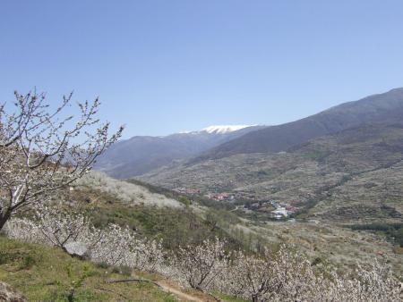 . La floración de los cerezos en el valle del Jerte. img_20120331182719.jpg