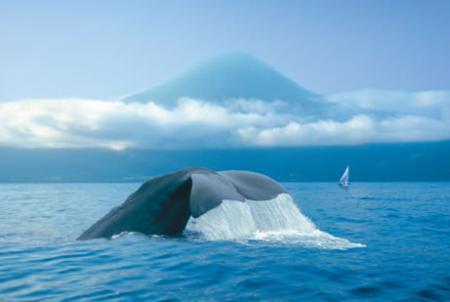 . La isla do Pico, atalaya de las Azores. img_20120515143308.jpg