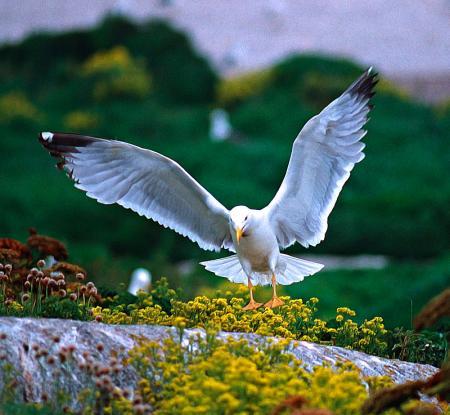 . Las islas Sisargas, mirador de la Costa da Morte. img_20120607145311.jpg