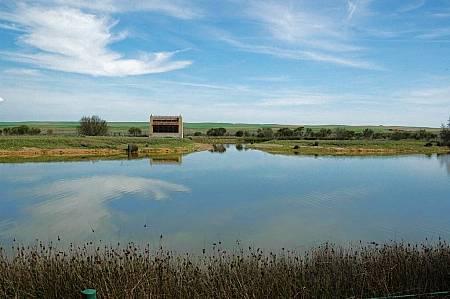 . Reserva Natural de las lagunas de Villafáfila. img_20120718233327.jpg