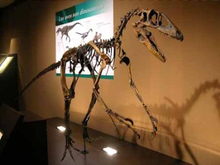 Guiarural. El Museo Jurásico de Asturias, un viaje en el tiempo. img_20100923134336.jpg