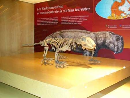 Guiarural. El Museo Jurásico de Asturias, un viaje en el tiempo. img_20100923134410.jpg