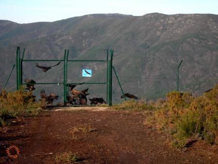 Guiarural. Muladar de Largijo. img_20101121142803.jpg